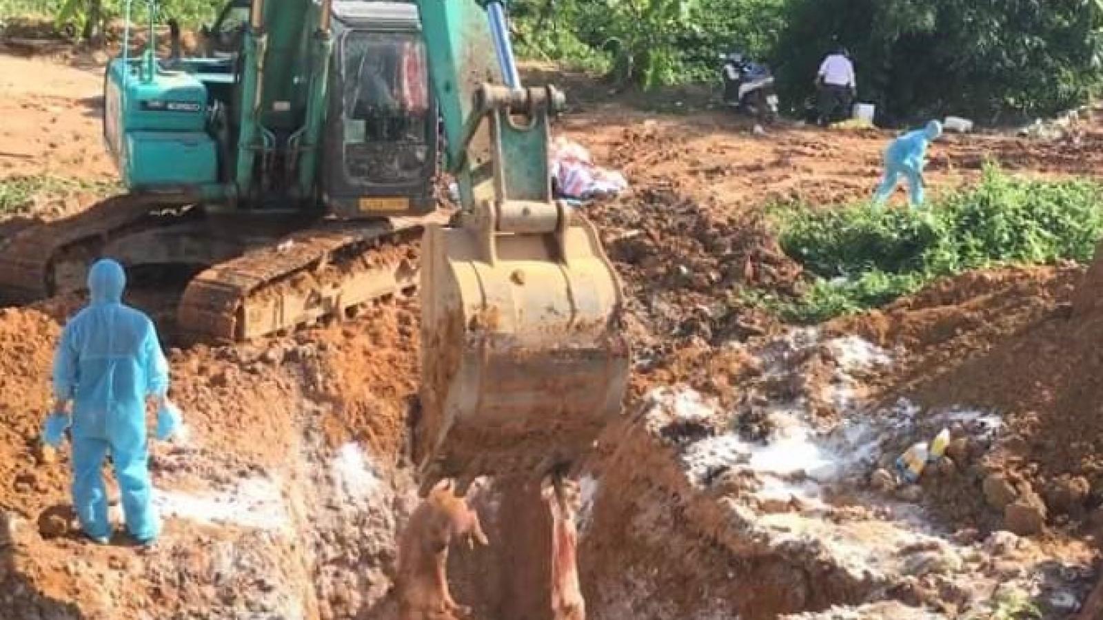 Bùng phát ổ dịch tả lợn Châu Phi ở xã biên giới tỉnh Kon Tum