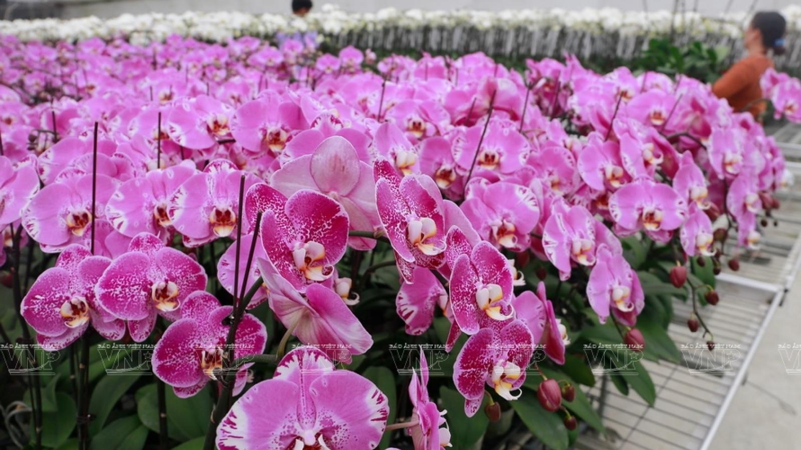 Thu nhập hàng tỷ đồng từ trồng hoa, cây cảnh