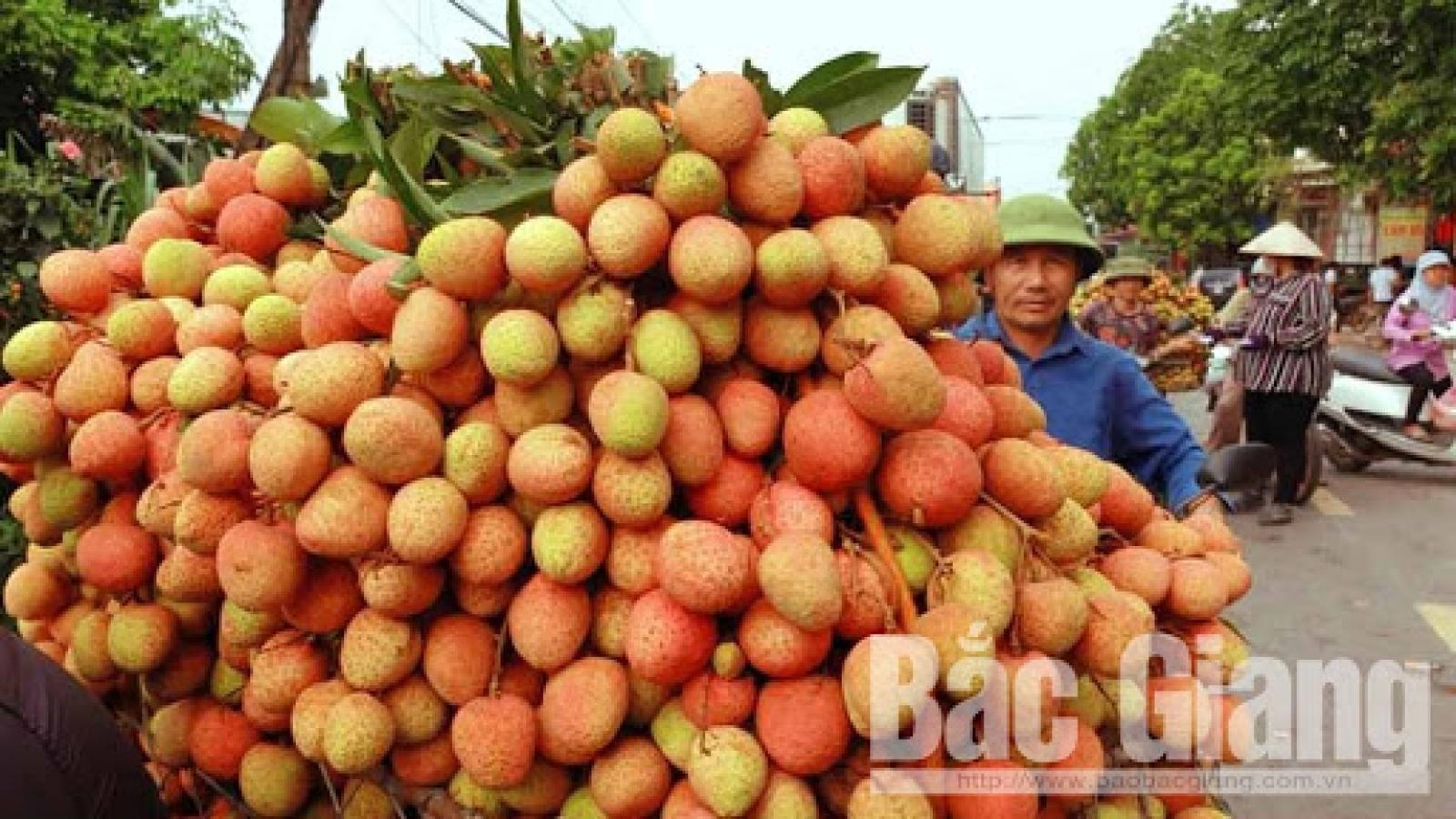 Bắc Giang xuất khẩu 15 tấn vải thiều sang thị trường Nhật Bản