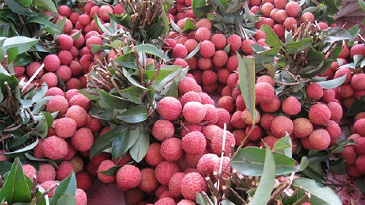 Hai Duong lychees to be launched on four major e-commerce floors