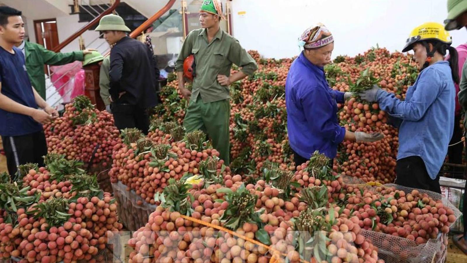 Bộ Công Thương hỏa tốc đề nghị phối hợp xuất khẩu nông sản qua biên giới