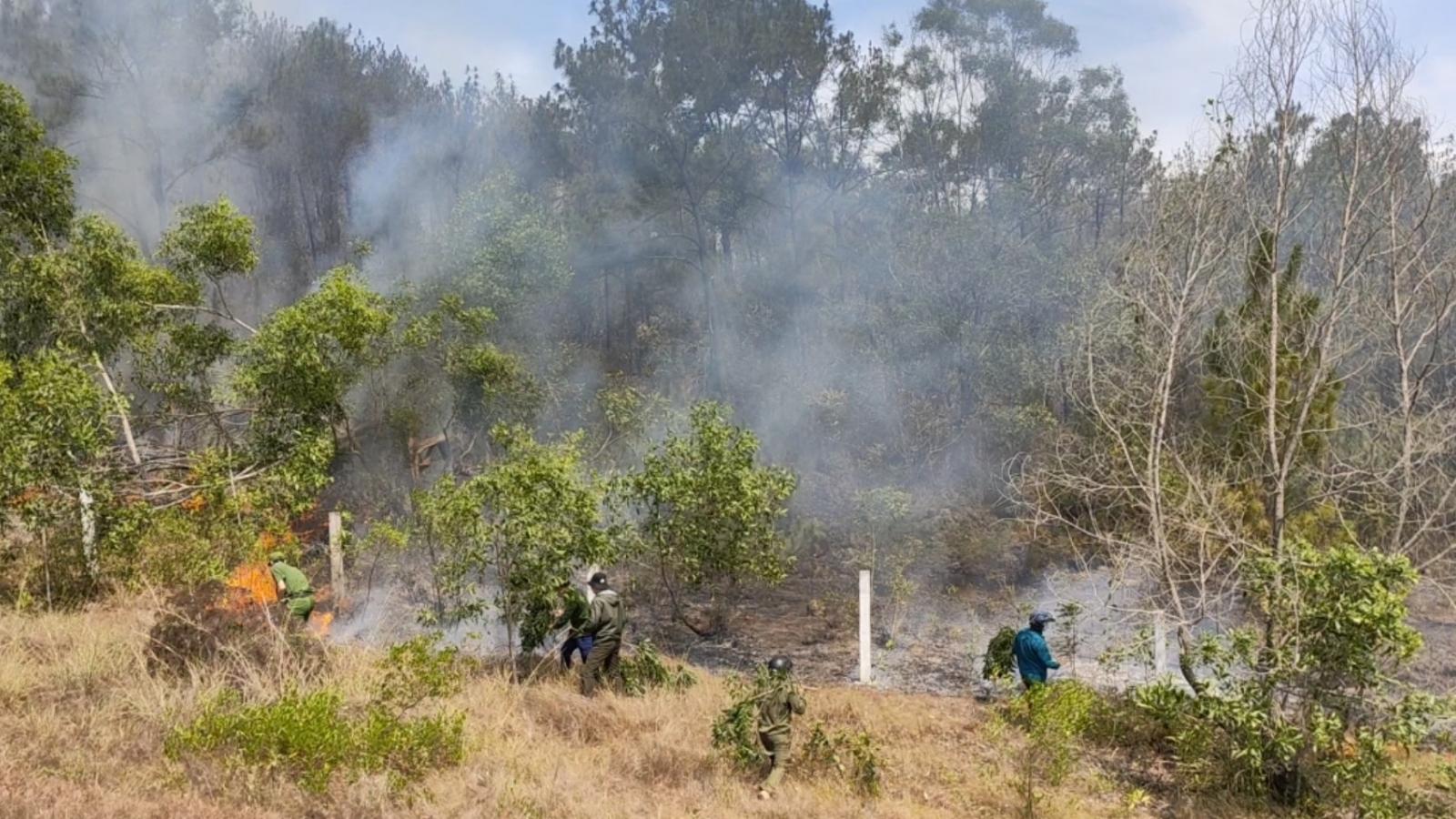 Công an vào cuộc điều tra vụ cháy 45 héc ta rừng ở Quảng Nam