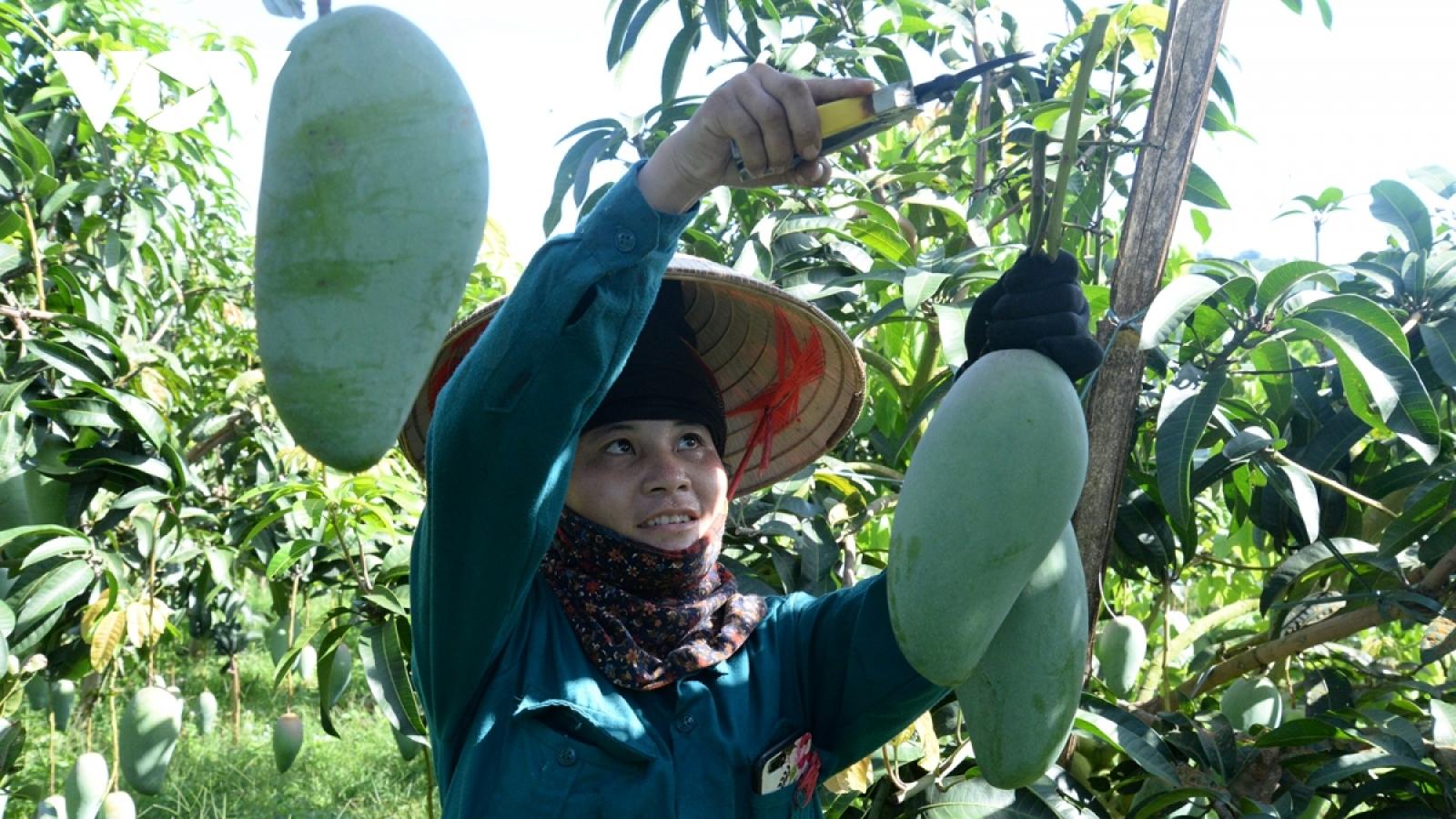 Điều chỉnh sản xuất, phương thức kinh doanh để tiêu thụ các mặt hàng nông sản