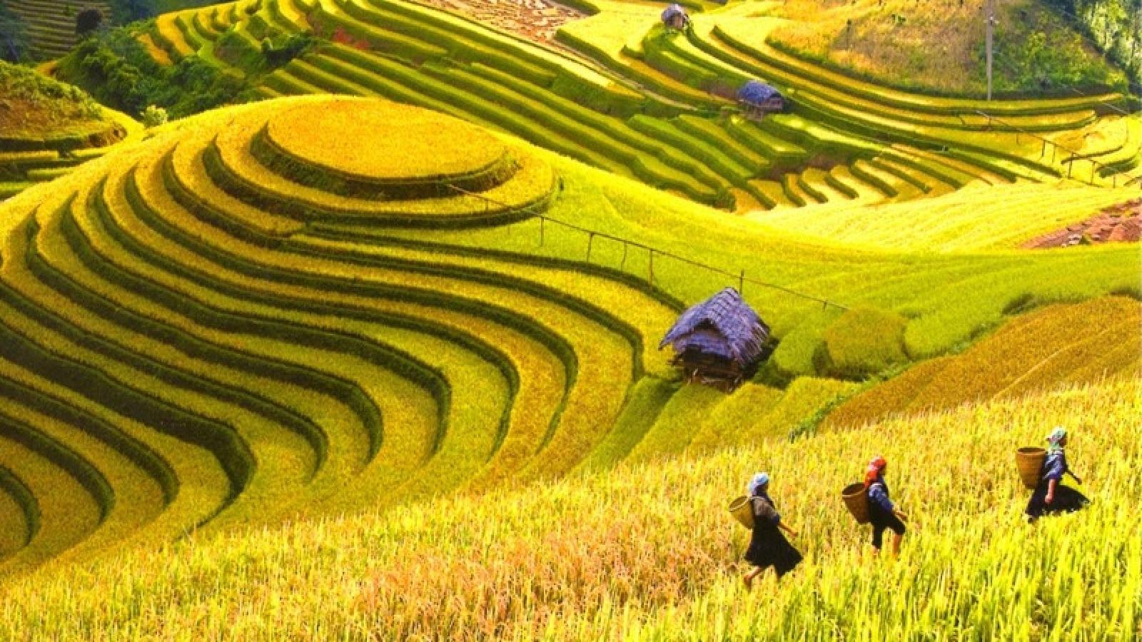 Hoang Su Phi terraced fields to be spotlighted in culture week