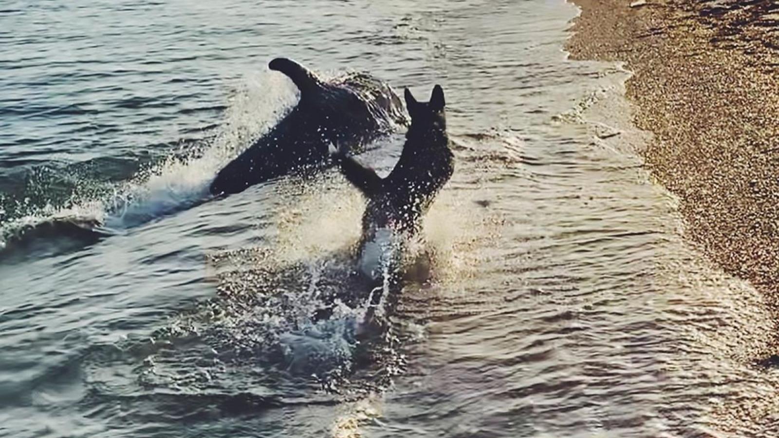 Cảnh tượng đáng kinh ngạc khi đàn cá heo đùa giỡn với chú chó