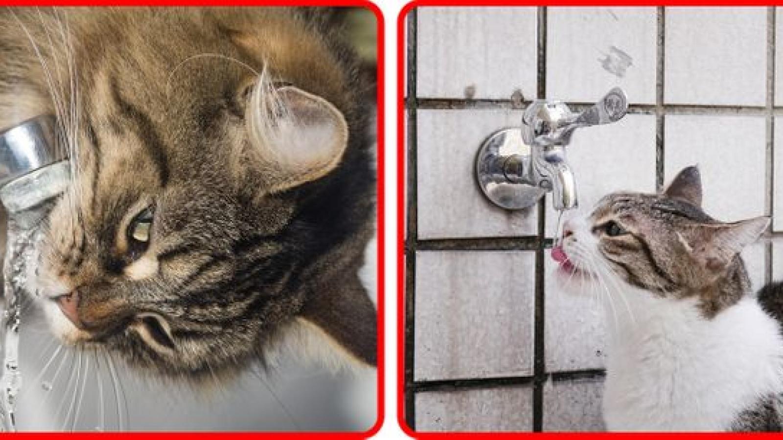 8 thói quen có thể khiến mèo của bạn gặp nguy hiểm
