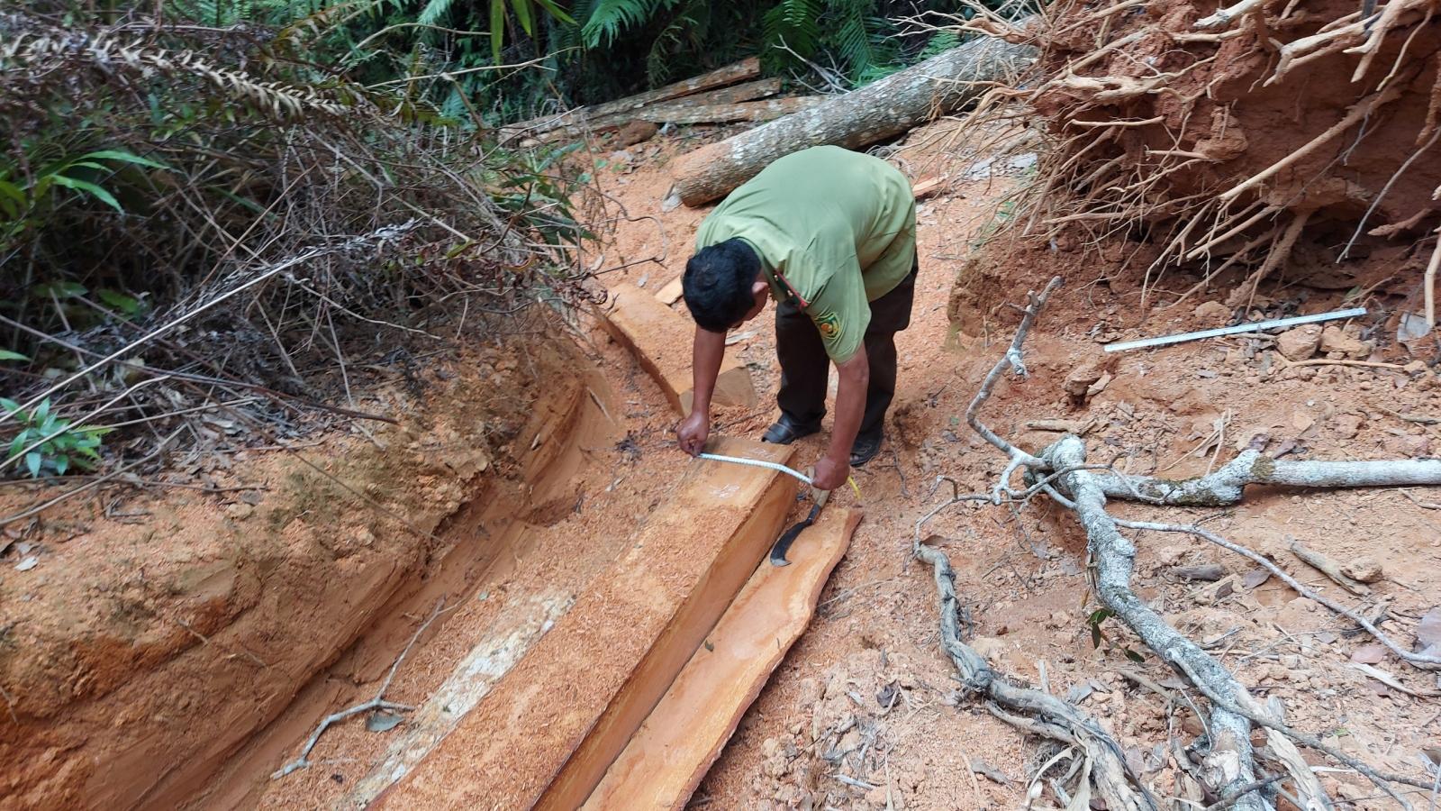 Gia Lai: Điều tra vụ phá rừng sản xuất ở Mang Yang