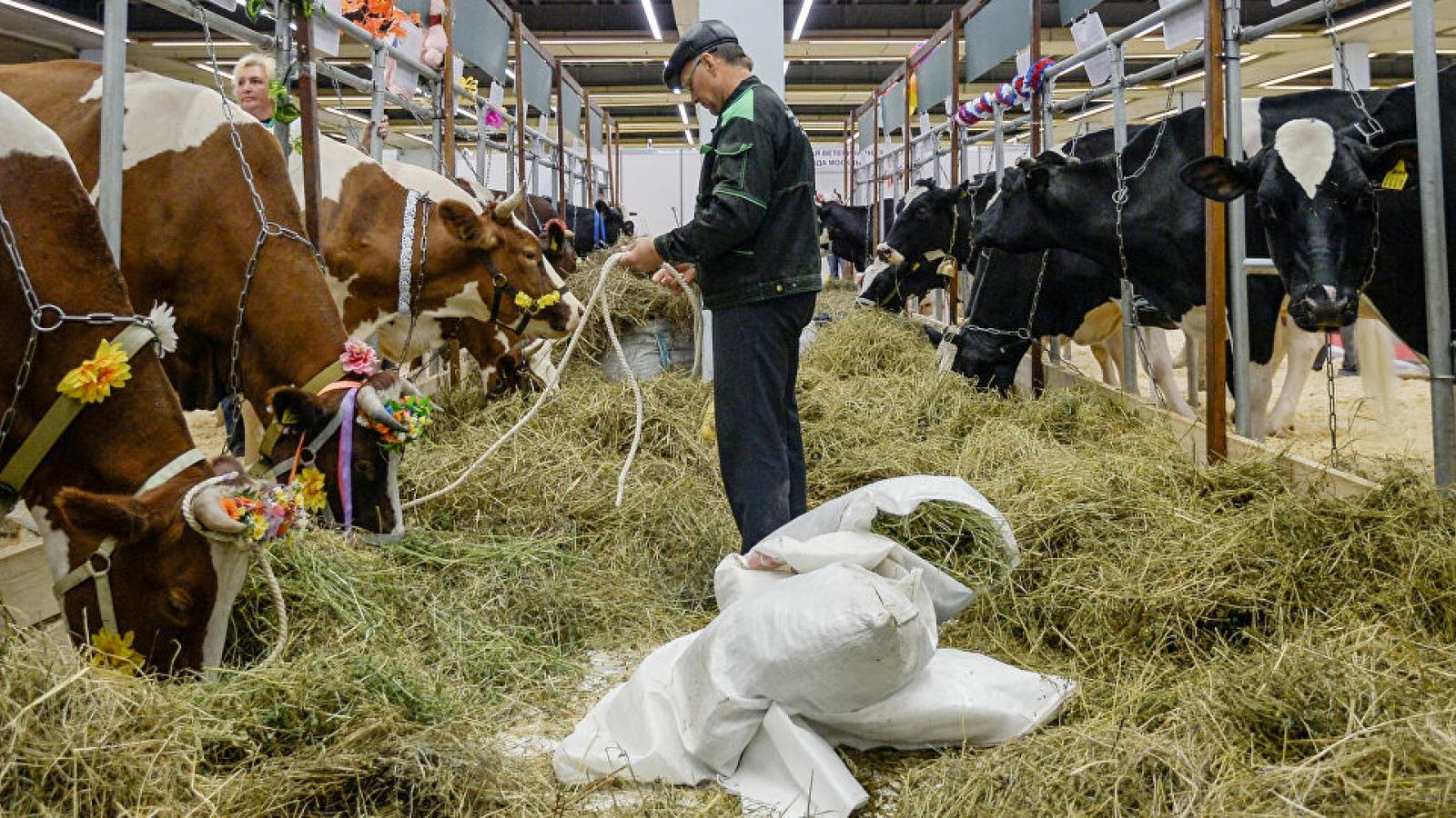 Nga cấm nhập khẩu thức ăn chăn nuôi từ Cộng hòa Czech