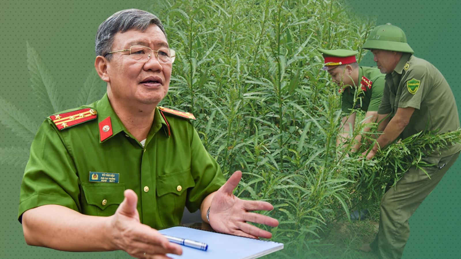 Trồng cần sa trong vườn ngay giữa Hà Nội: Luật pháp chưa đủ sức răn đe?