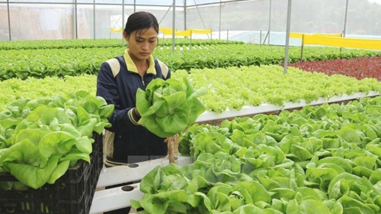 Nearly 36% of public investment for agriculture disbursed in six months
