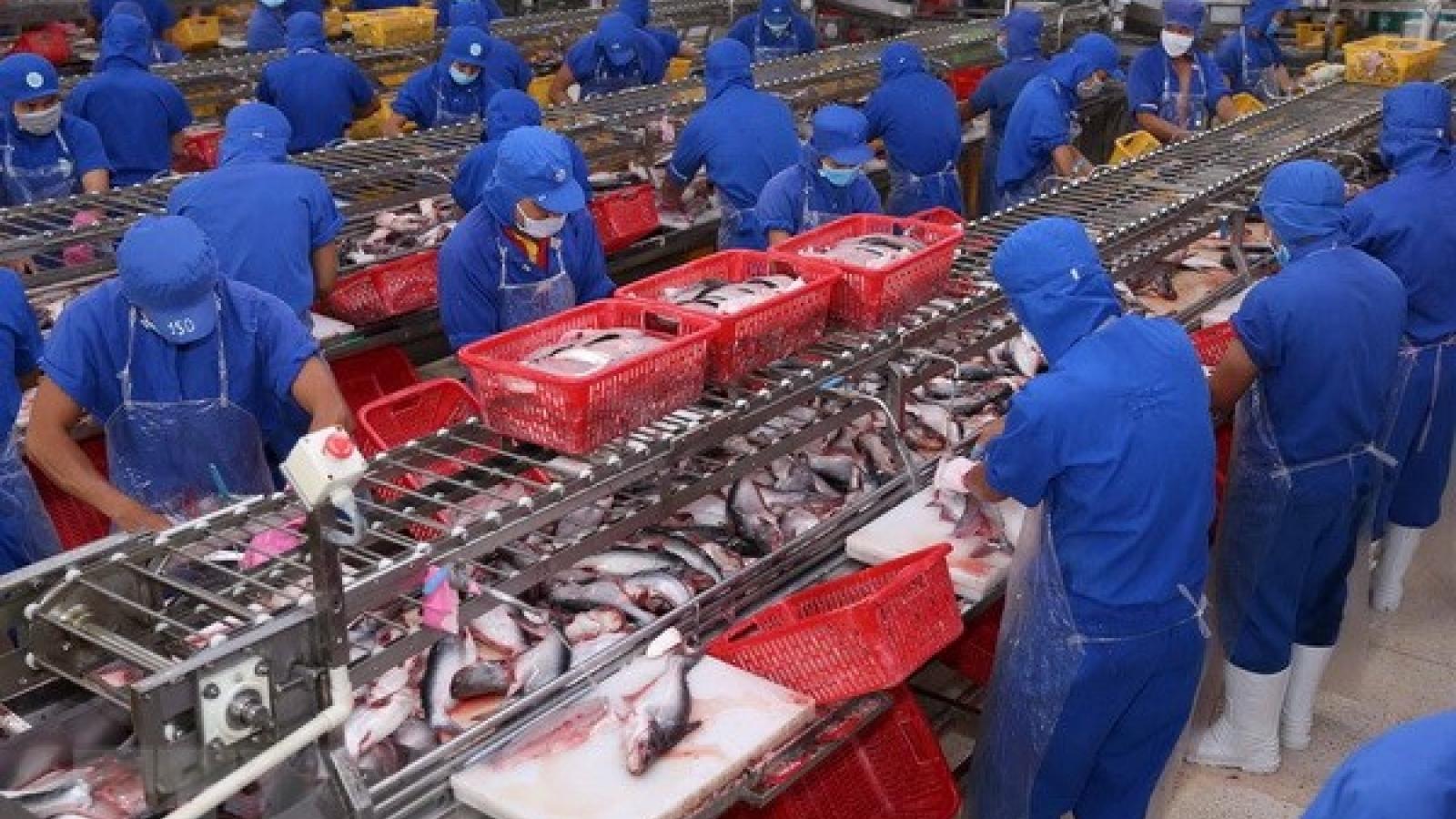 Xuất khẩu cá tra sang EU giảm mạnh 5 tháng qua