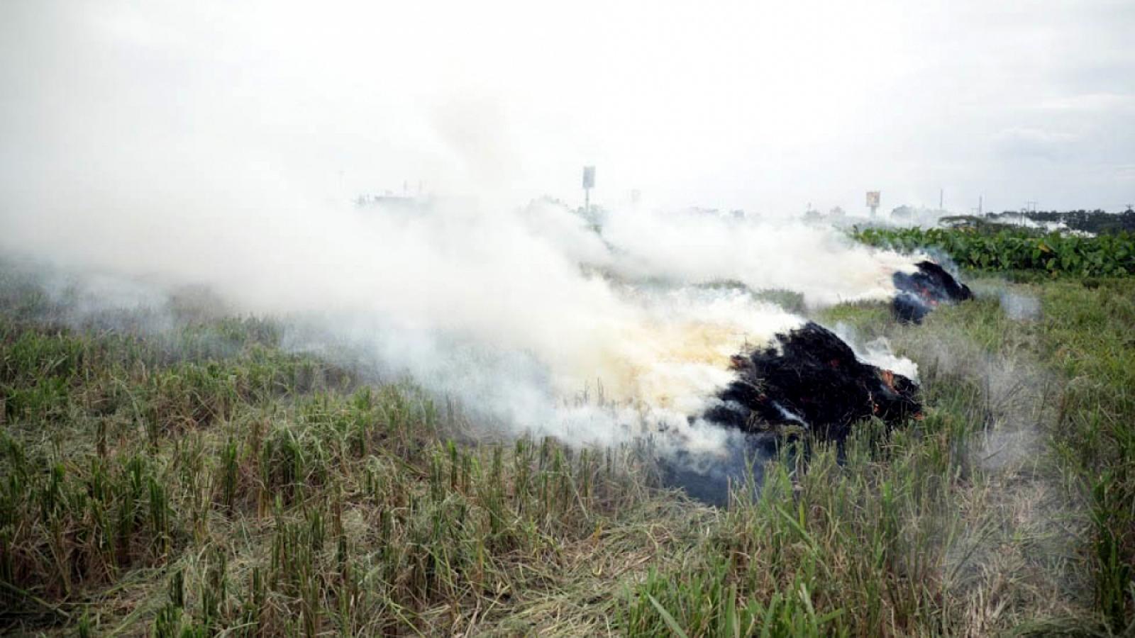 Hà Nội sẽ xử lý nghiêm việc đốt rơm rạ không đúng quy định