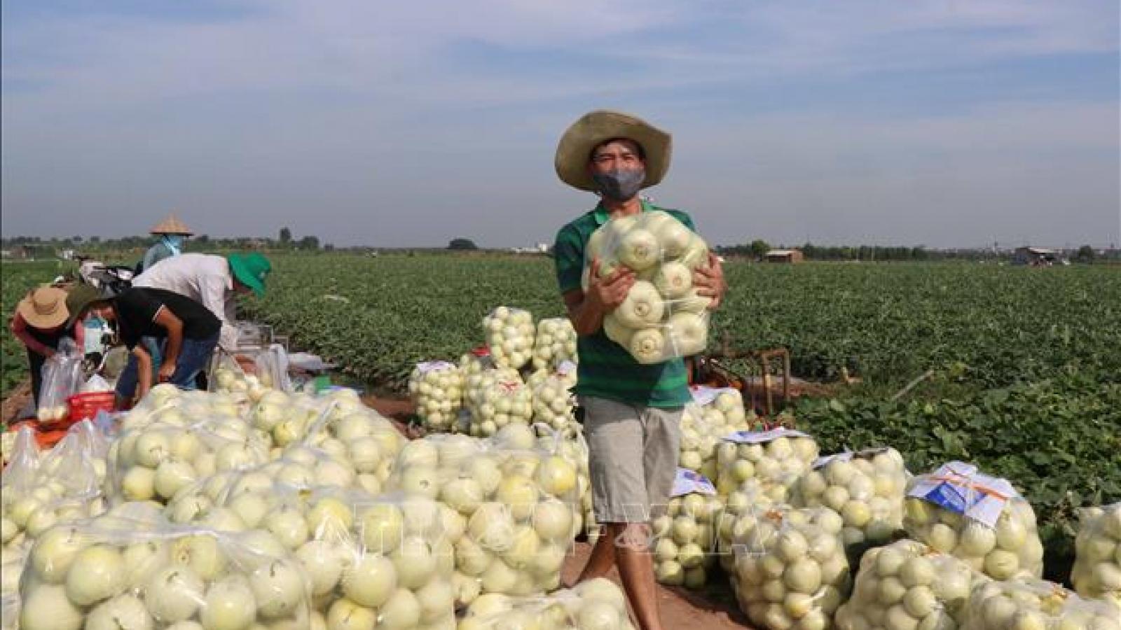 Gỡ khó tiêu thụ nông sản trong và ngoài nước