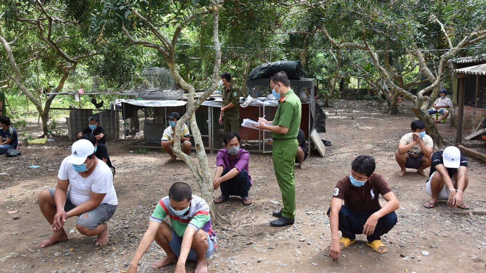 Bắt giữ 19 đối tượng đá gà ăn tiền trong thời gian giãn cách xã hội tại Tiền Giang