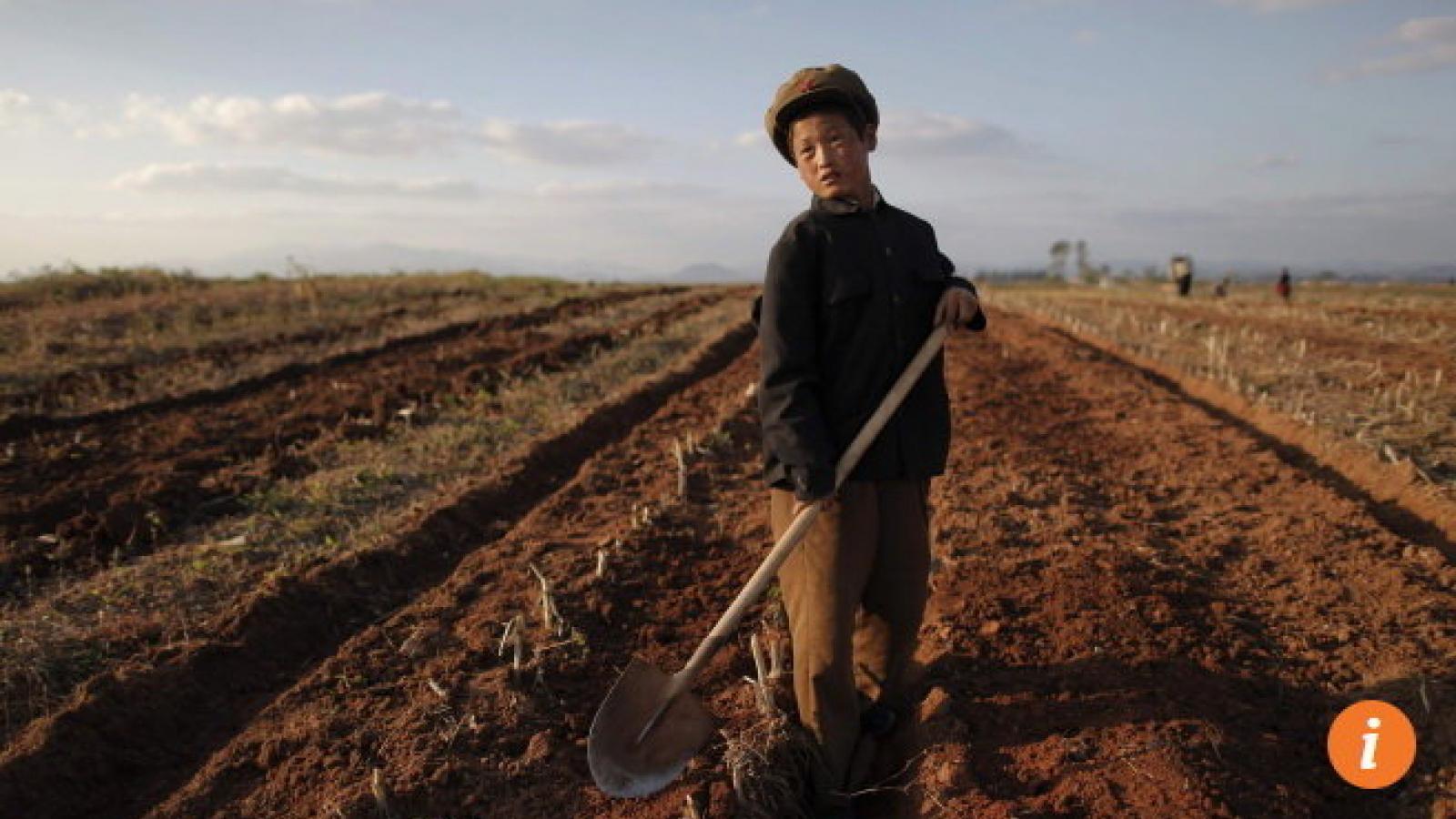 Triều Tiên có thể thiếu gần 1 triệu tấn lương thực trong năm nay