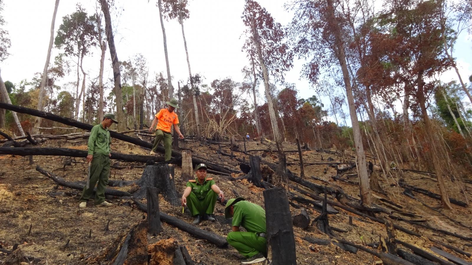 Điều tra, xử lý sai phạm, tham nhũng rừng: Khó và vướng ở đâu