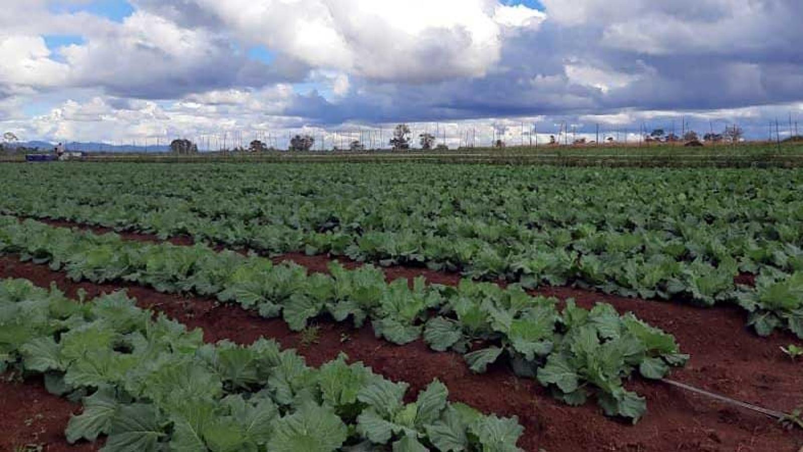 Lào thúc đẩy sản xuất nông nghiệp sạch phục vụ xuất khẩu