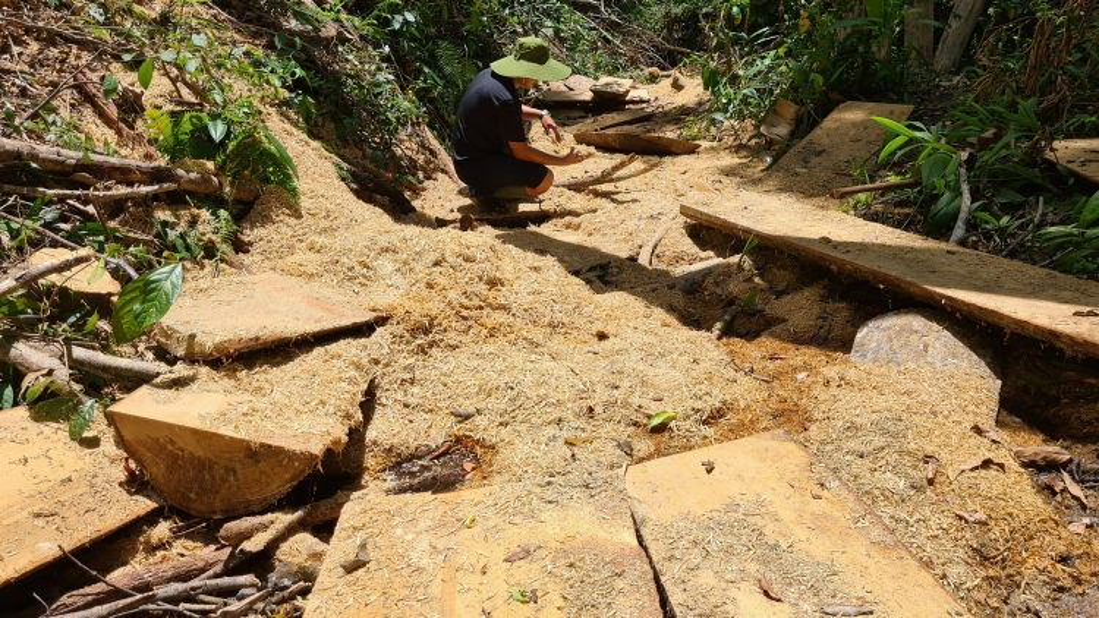 Huyện Kbang chỉ đạo điều tra vụ phá rừng cổ thụ ở xã Đăk Roong
