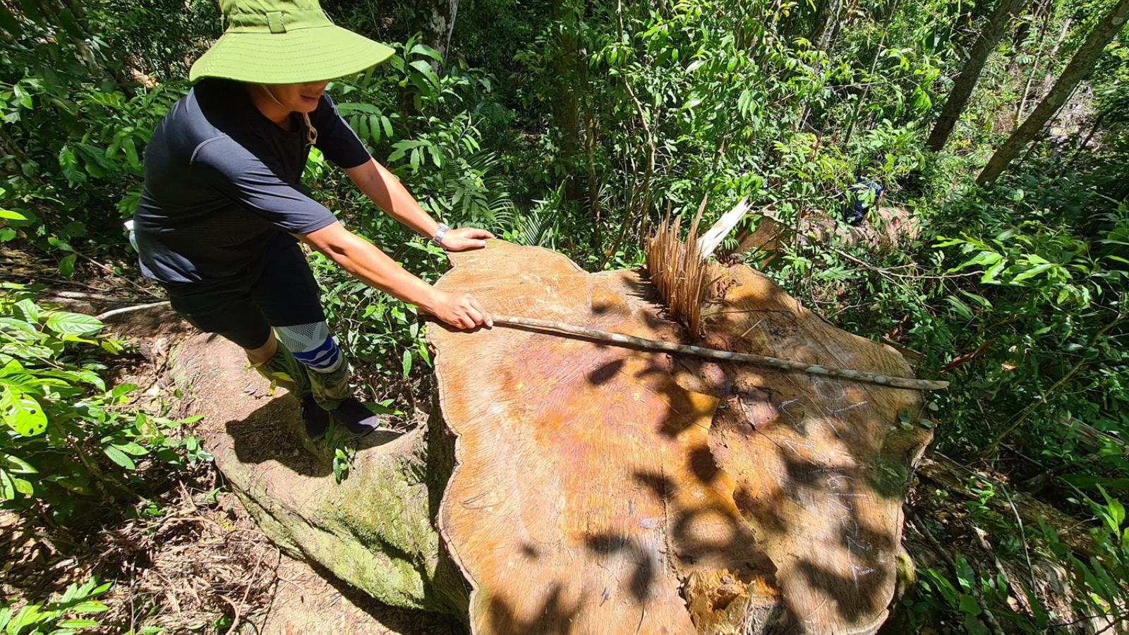 """Nóng tình trạng """"rút ruột"""" rừng ở huyện Kbang,Gia Lai"""