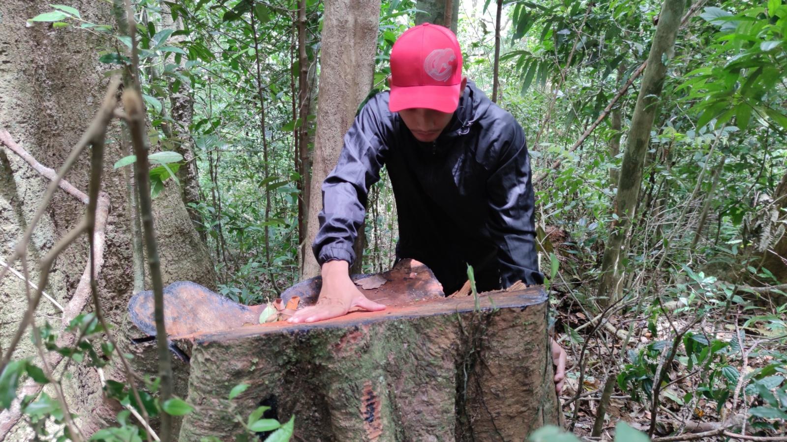 Gia Lai khởi tố vụ phá rừng ở xã Hra