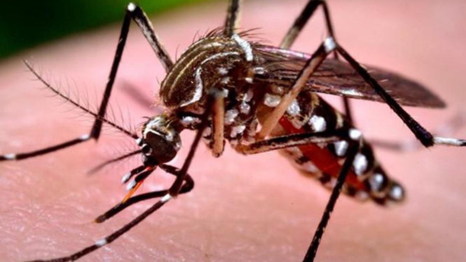 Hanoi aims to prevent spread of dengue fever
