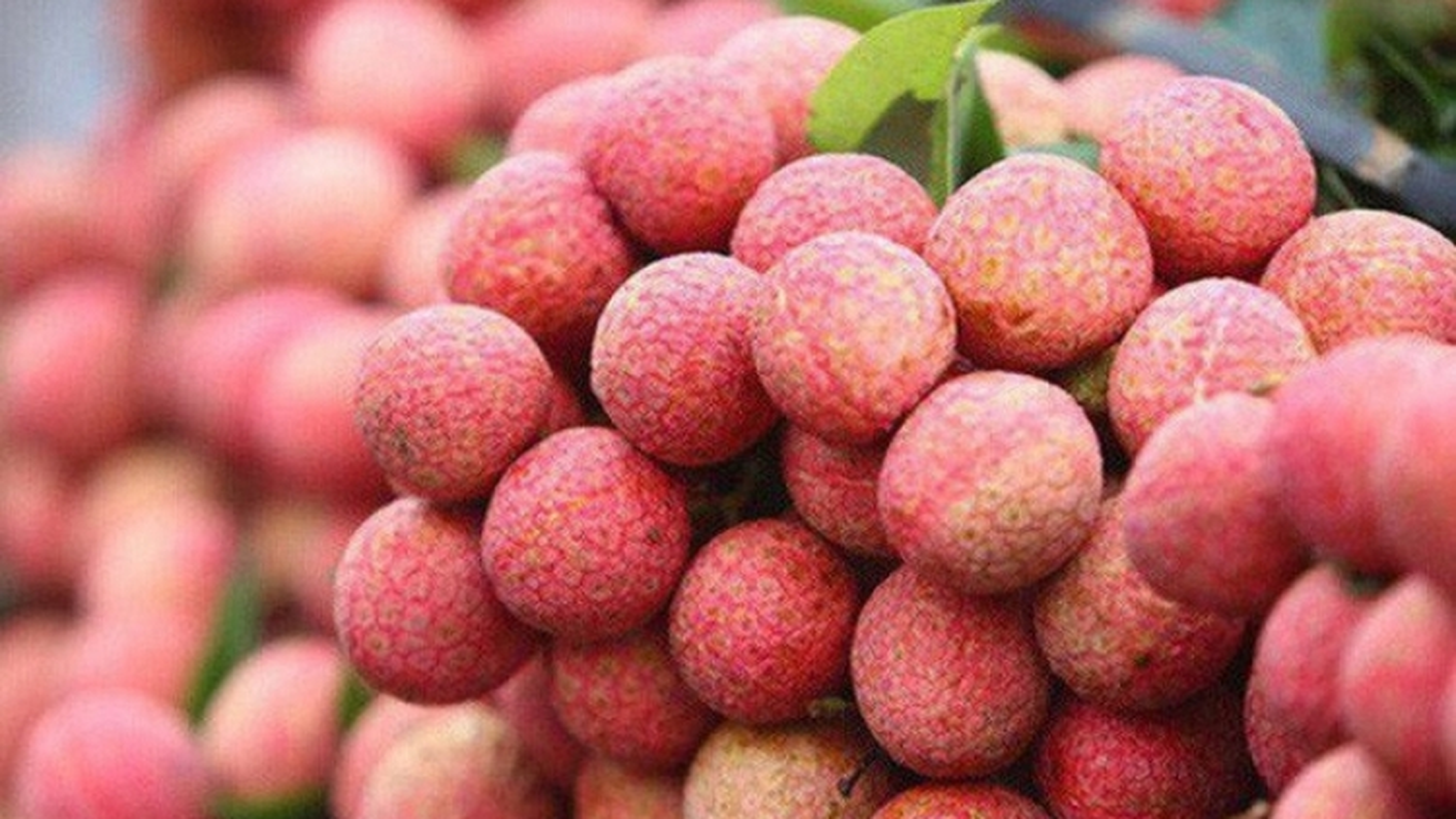 Tổng cục Quản lý thị trường cam kết hỗ trợ tiêu thụ 3.000 tấn vải thiều Bắc Giang