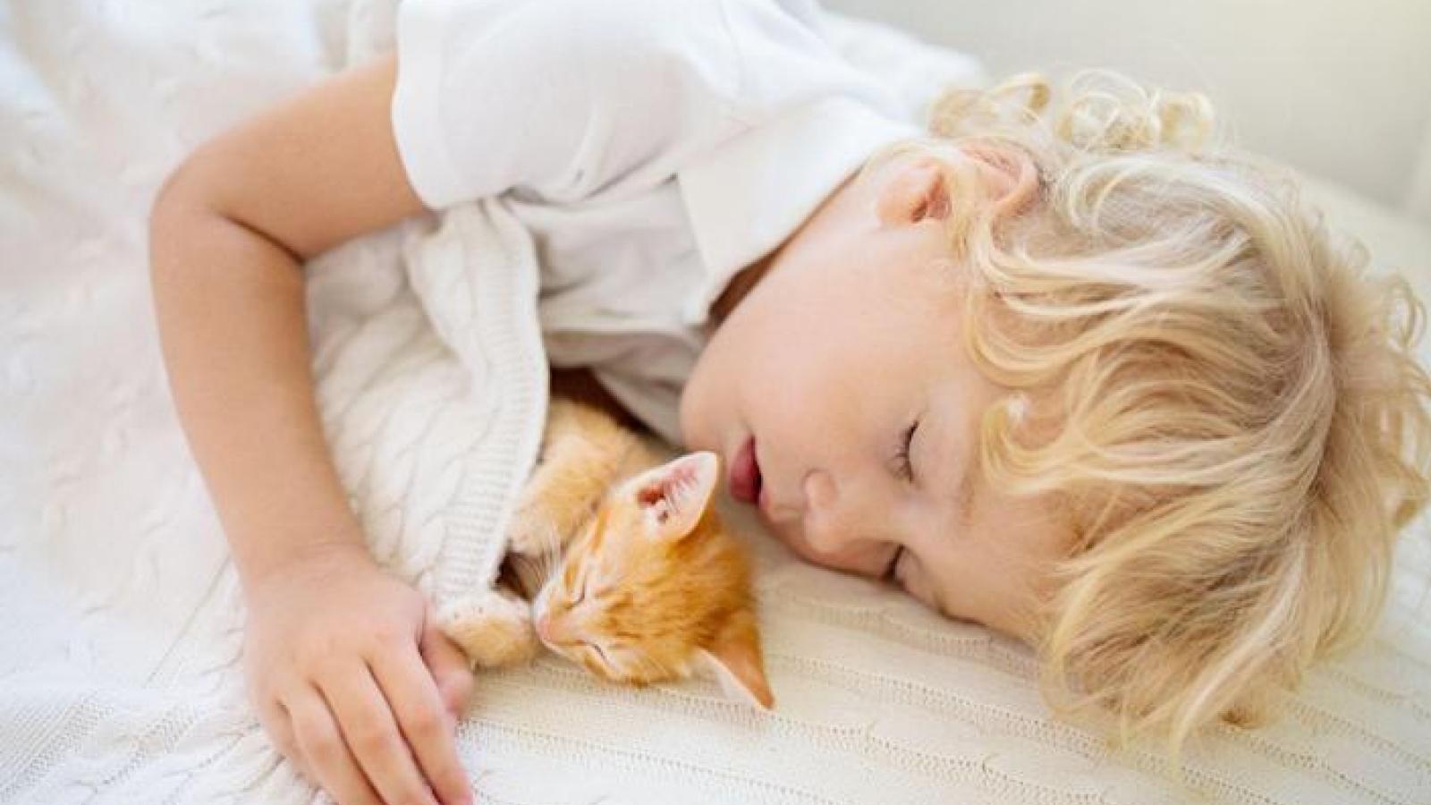 Có nên cho bé yêu ngủ chung với thú cưng?