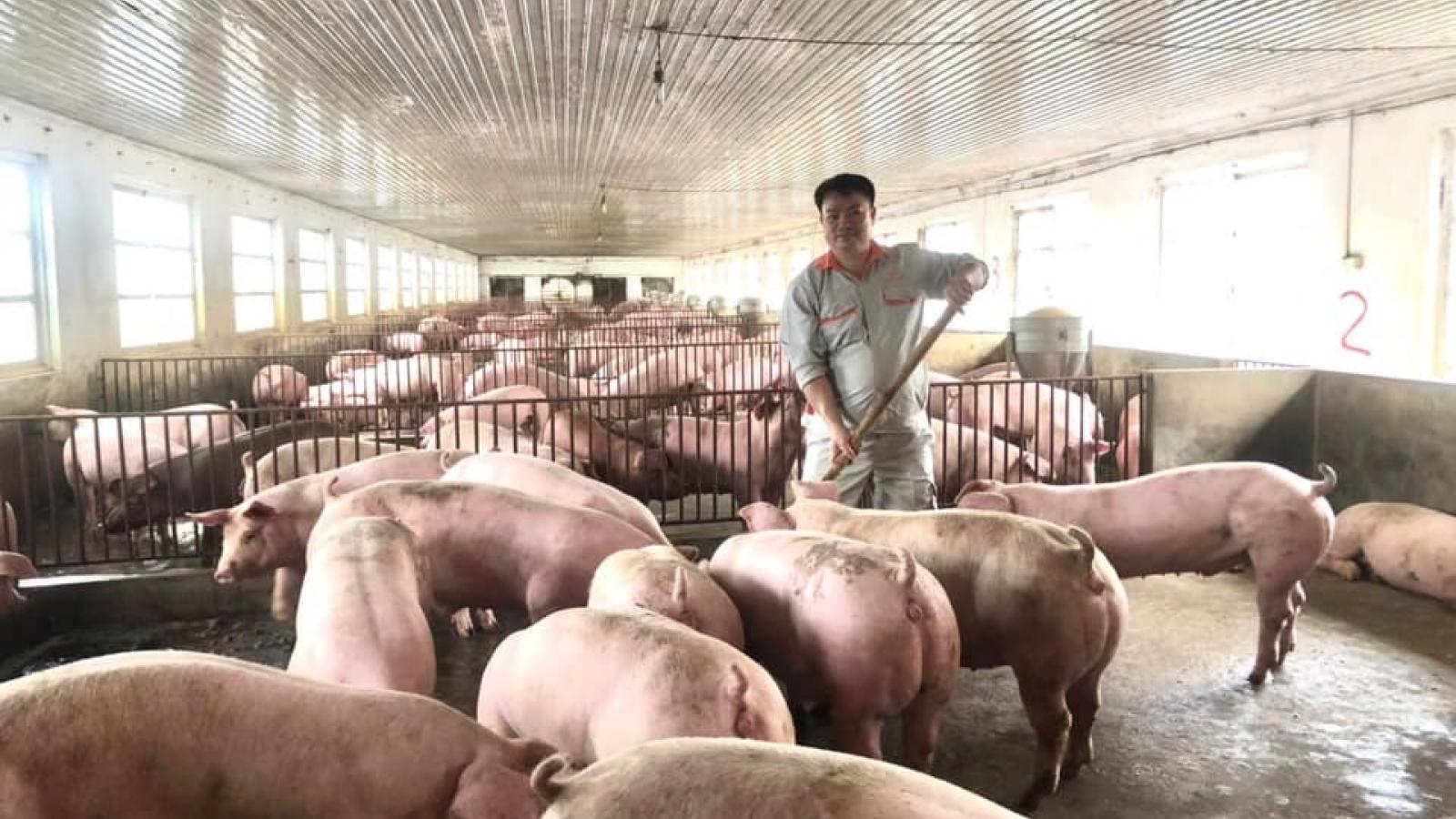 Nông dân nuôi gà, lợn điêu đứng vì giá thức ăn chăn nuôi tăng mạnh