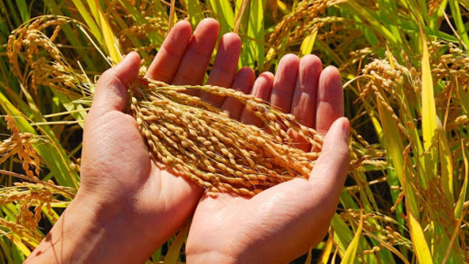 """Nông nghiệp có vai trò đặc biệt quan trọng trong điều kiện """"bình thường mới"""""""