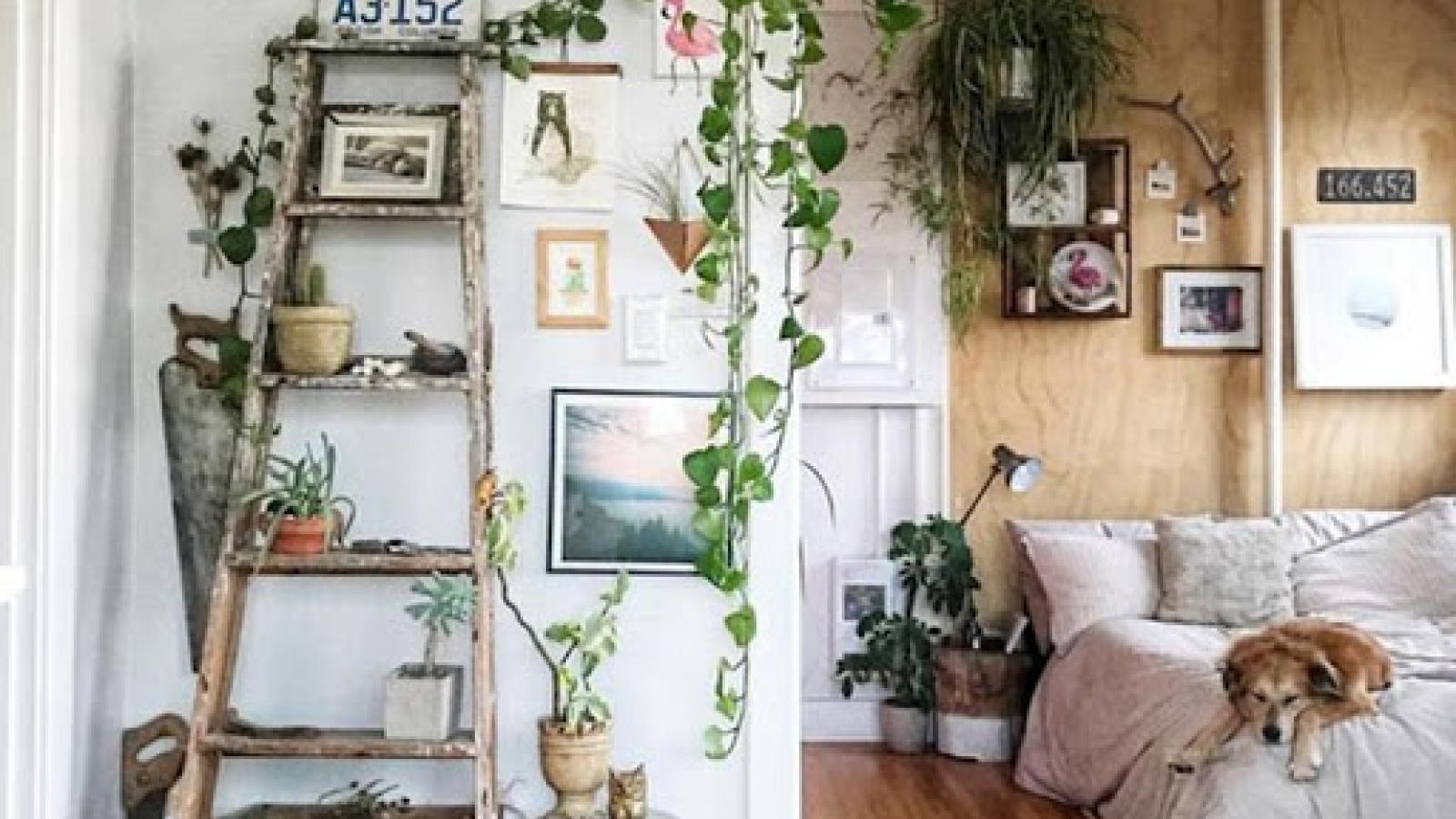 Những ý tưởng trang trí nhà đơn giản mà tiết kiệm