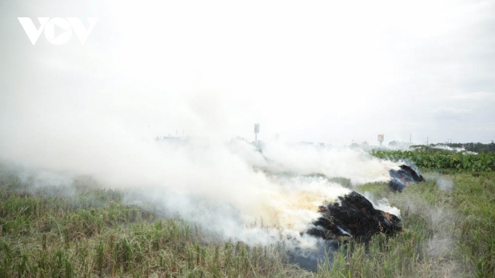 Đốt rơm rạ mỗi vụ ở Hà Nội phát sinh hơn 23.000 tấn CO2 và 163,3 tấn bụi mịn PM2.5