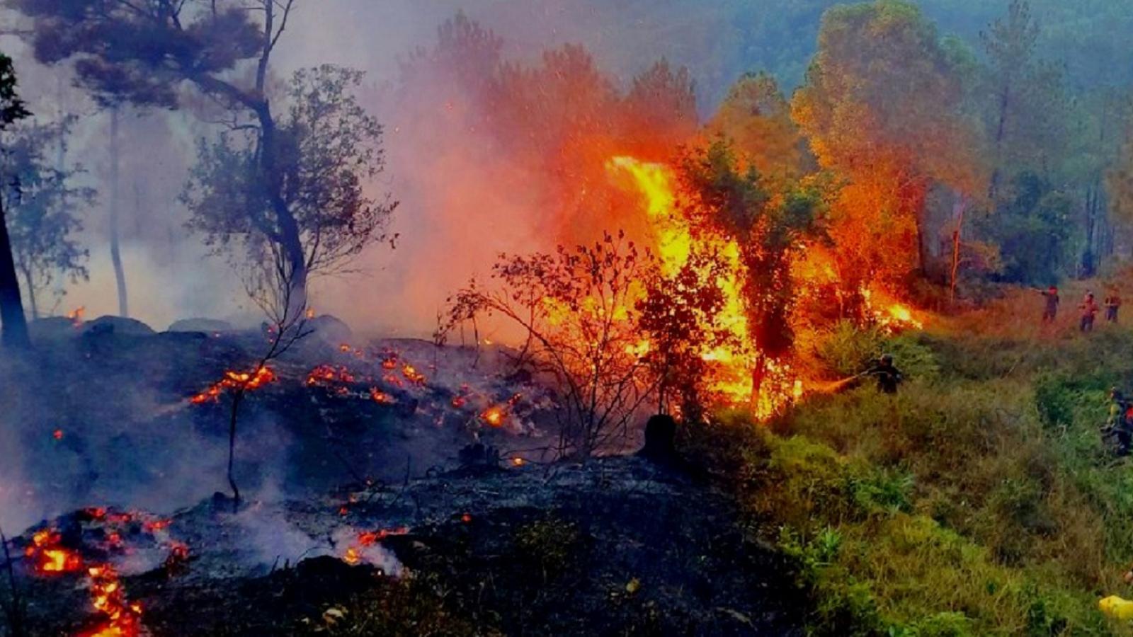 Hơn 30ha rừng thông tự nhiên và rừng trồng bị thiêu rụi trong đêm