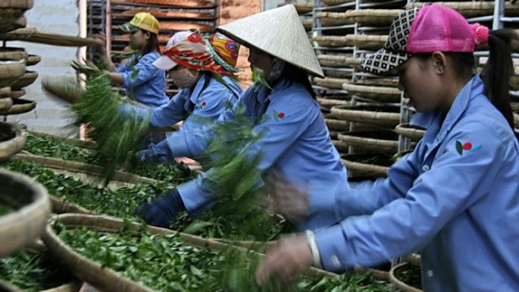 Positive outlook ahead for tea exports in second quarter
