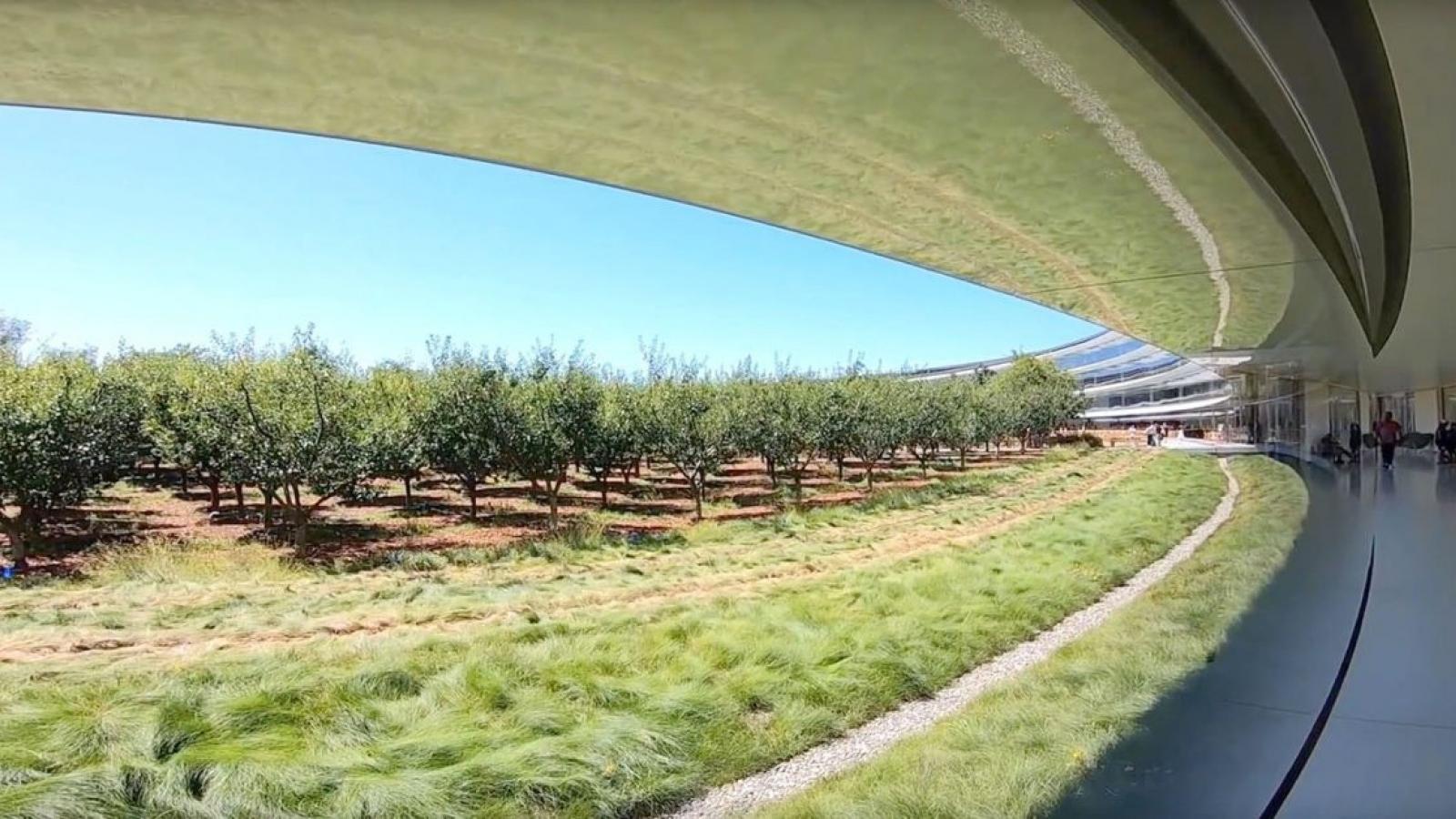 Apple làm gì trước làn sóng di cư khỏi Thung lũng Silicon?