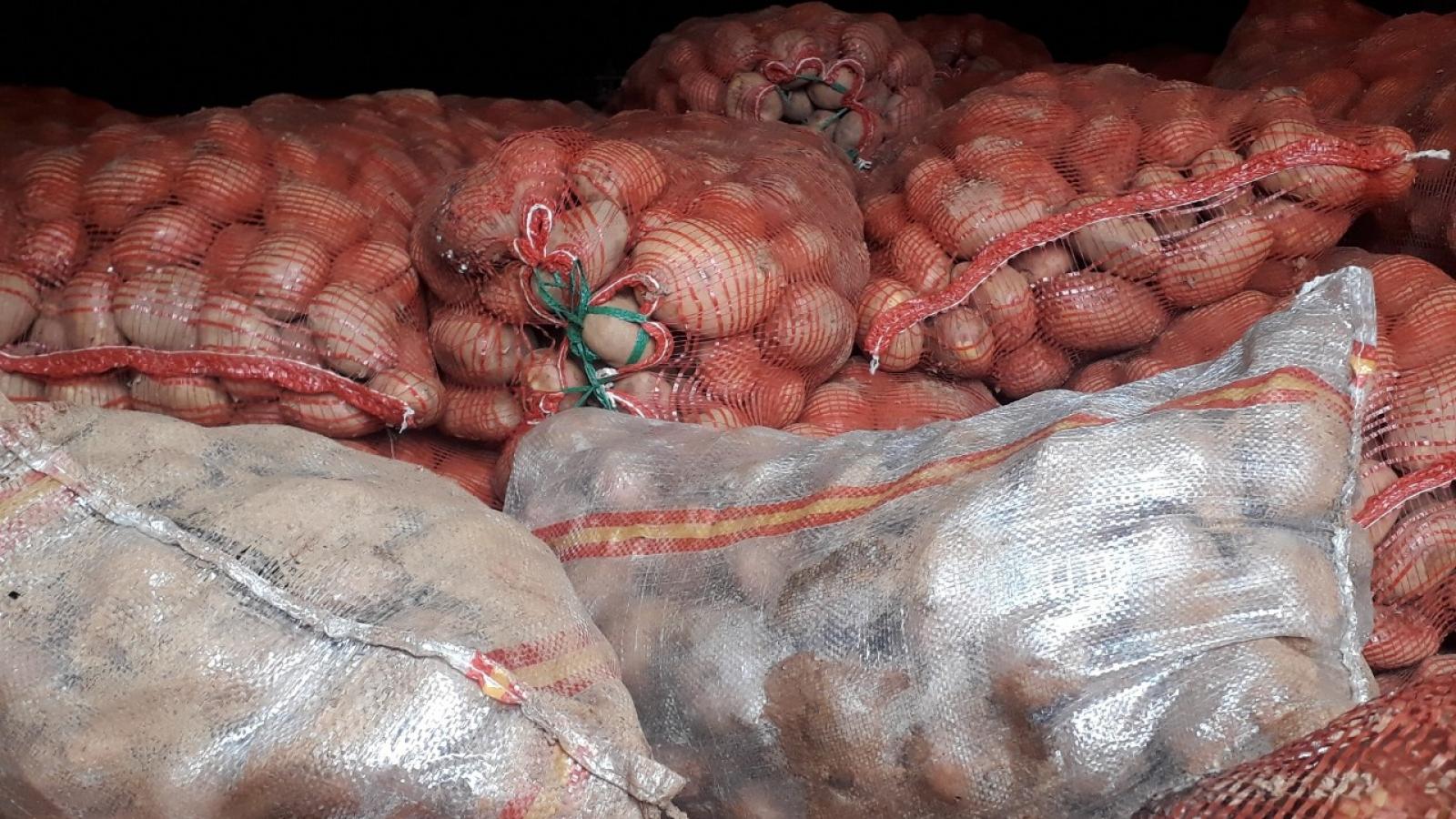 Khoai tây và hành tây Trung Quốc đổ về Đà Lạt