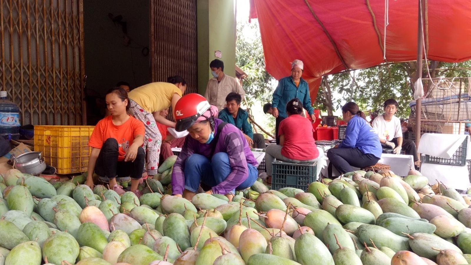 Kết nối trực tuyến: Kênh tiêu thụ và quảng bá hình ảnh nông sản Sơn La vươn xa