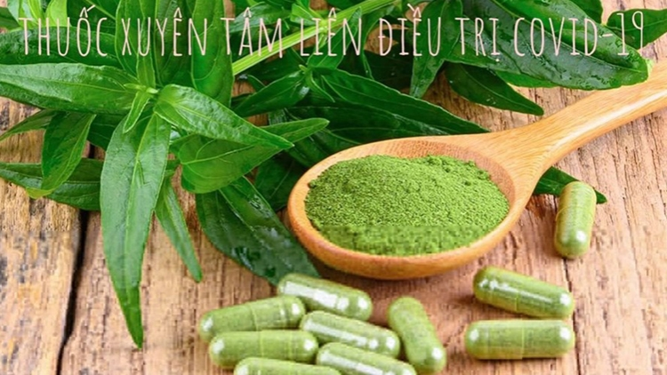 Vietnam prescribes Asian herb Andrographis for COVID-19 treatment