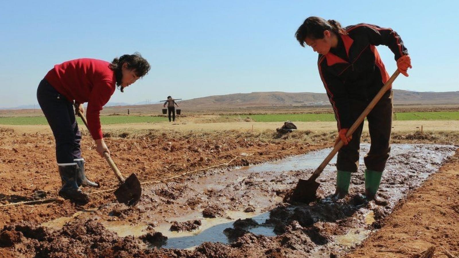 Triều Tiên tiếp tục đối mặt với hạn hán trong bối cảnh nước này thừa nhận thiếu lương thực
