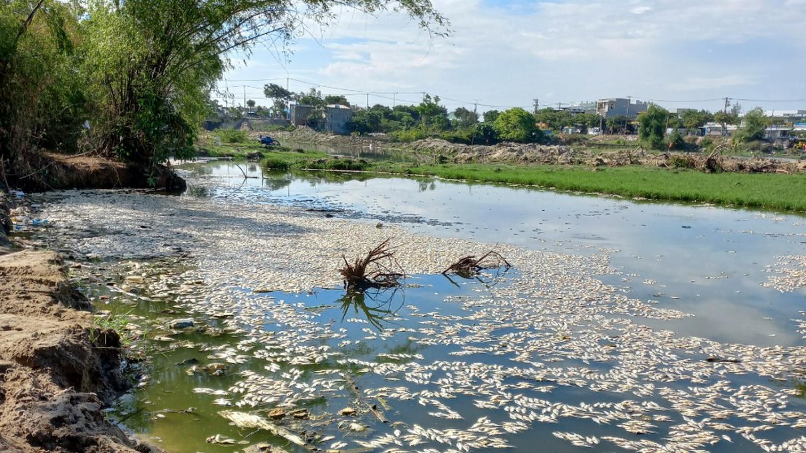 Cả tấn cá chết nổi trắng trên sông Cổ Cò