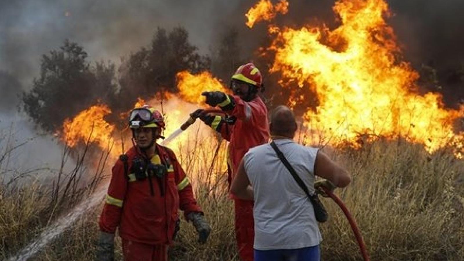 Cháy rừng nghiêm trọng nhất trong lịch sử, Cộng hòaSíp kêu gọi sự hỗ trợ quốc tế