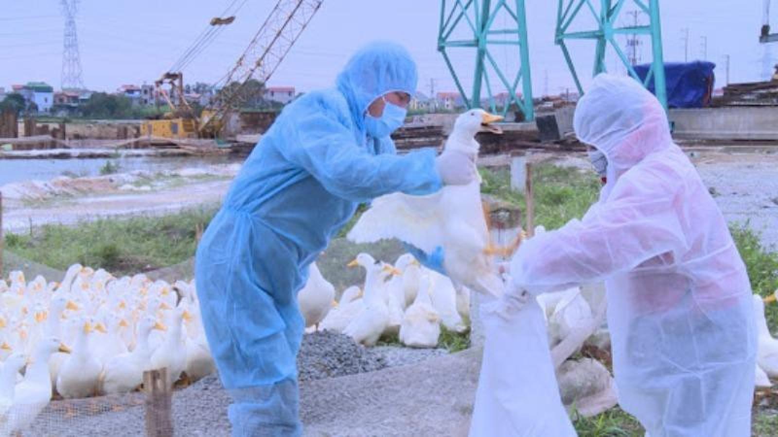 Bird flu outbreak recorded in northern Vietnam