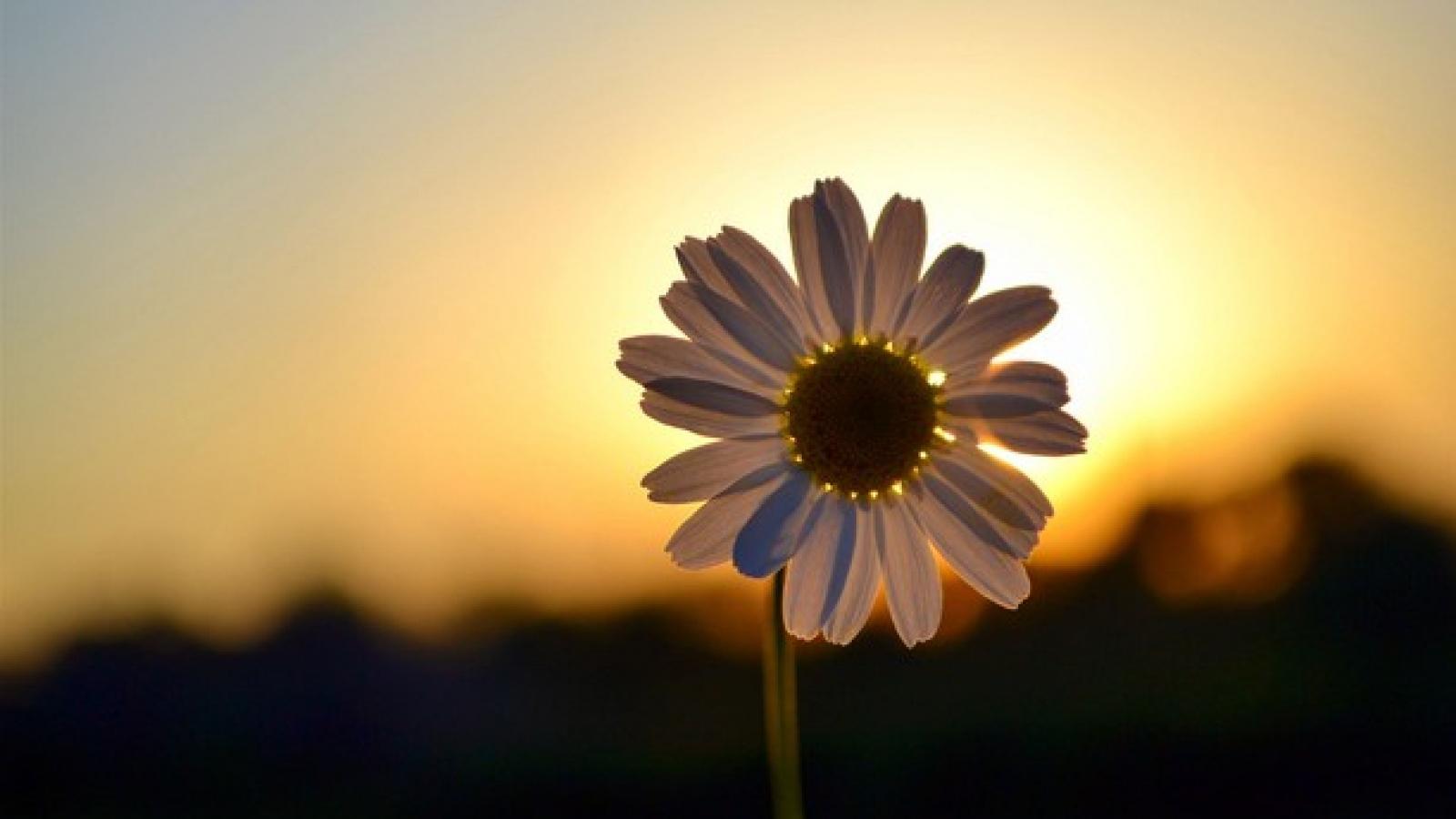 Kiên cường rồi cuộc sống sẽ nở hoa