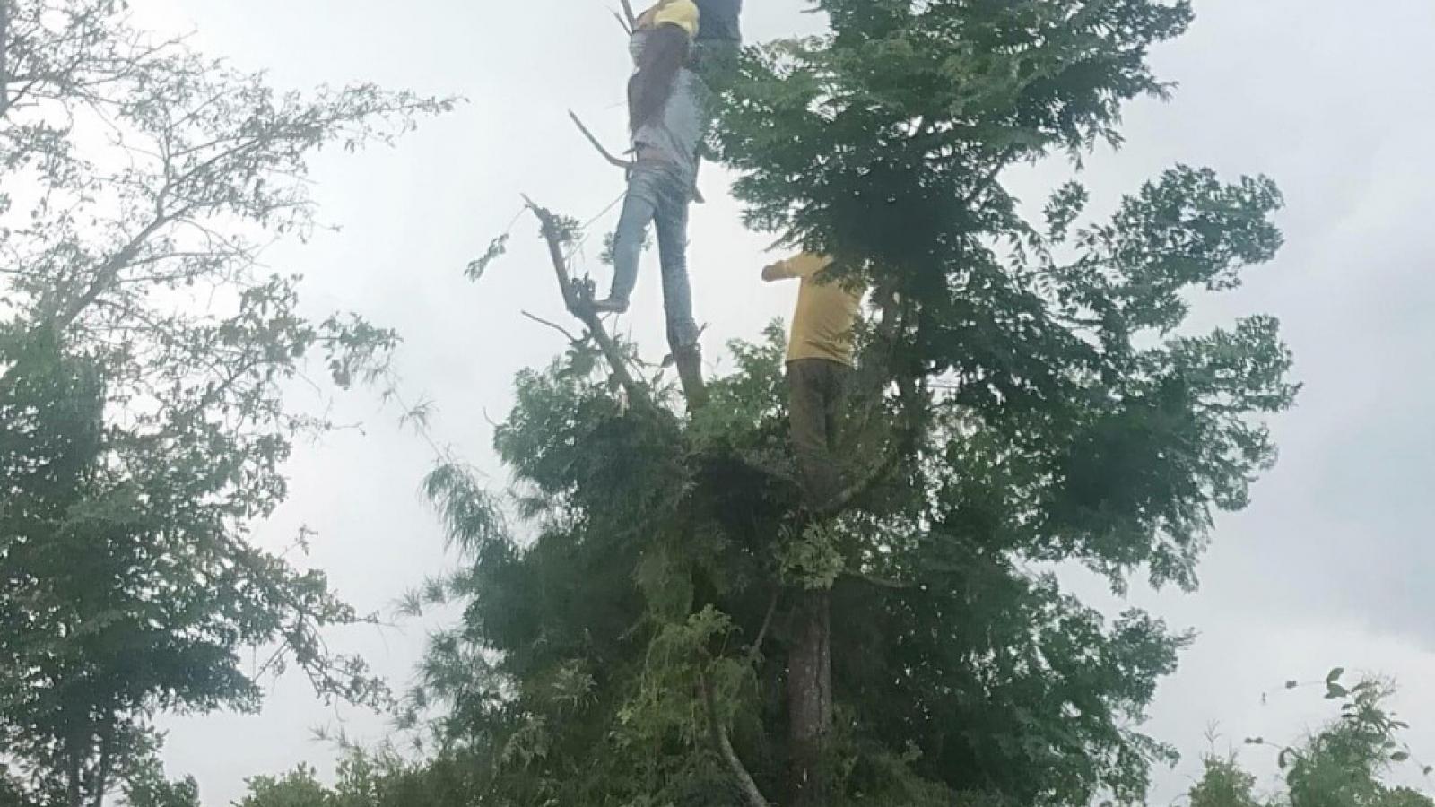 Trèo cây hái lá cho dê ăn, một phụ nữ ở Đắk Lắk bị điện giật tử vong