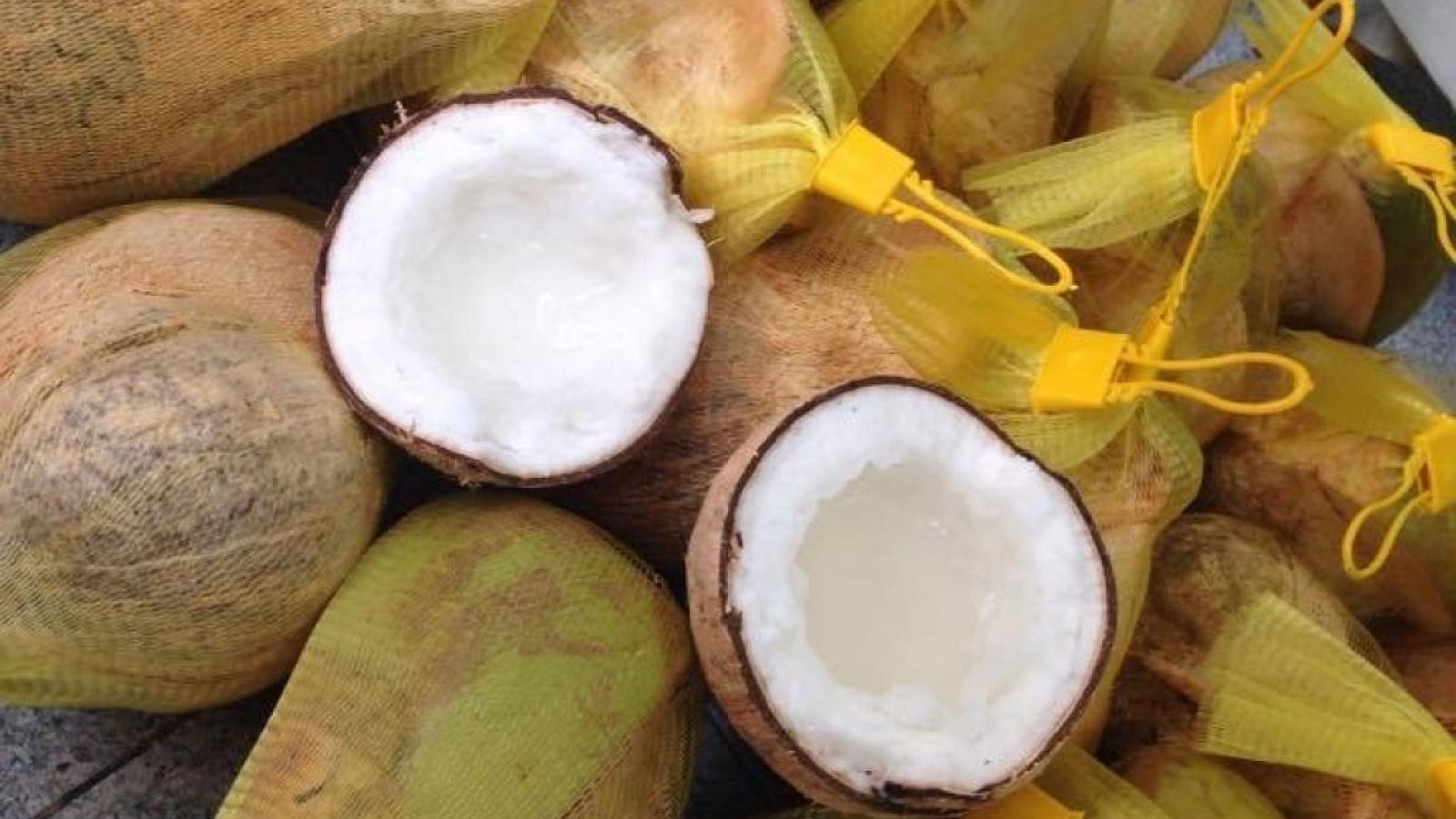 Loại dừa giá lên tới 300.000 đồng/quả mà khó mua