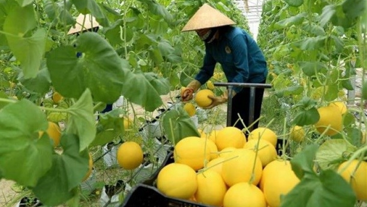 Second National Food Systems Summit Dialogue held