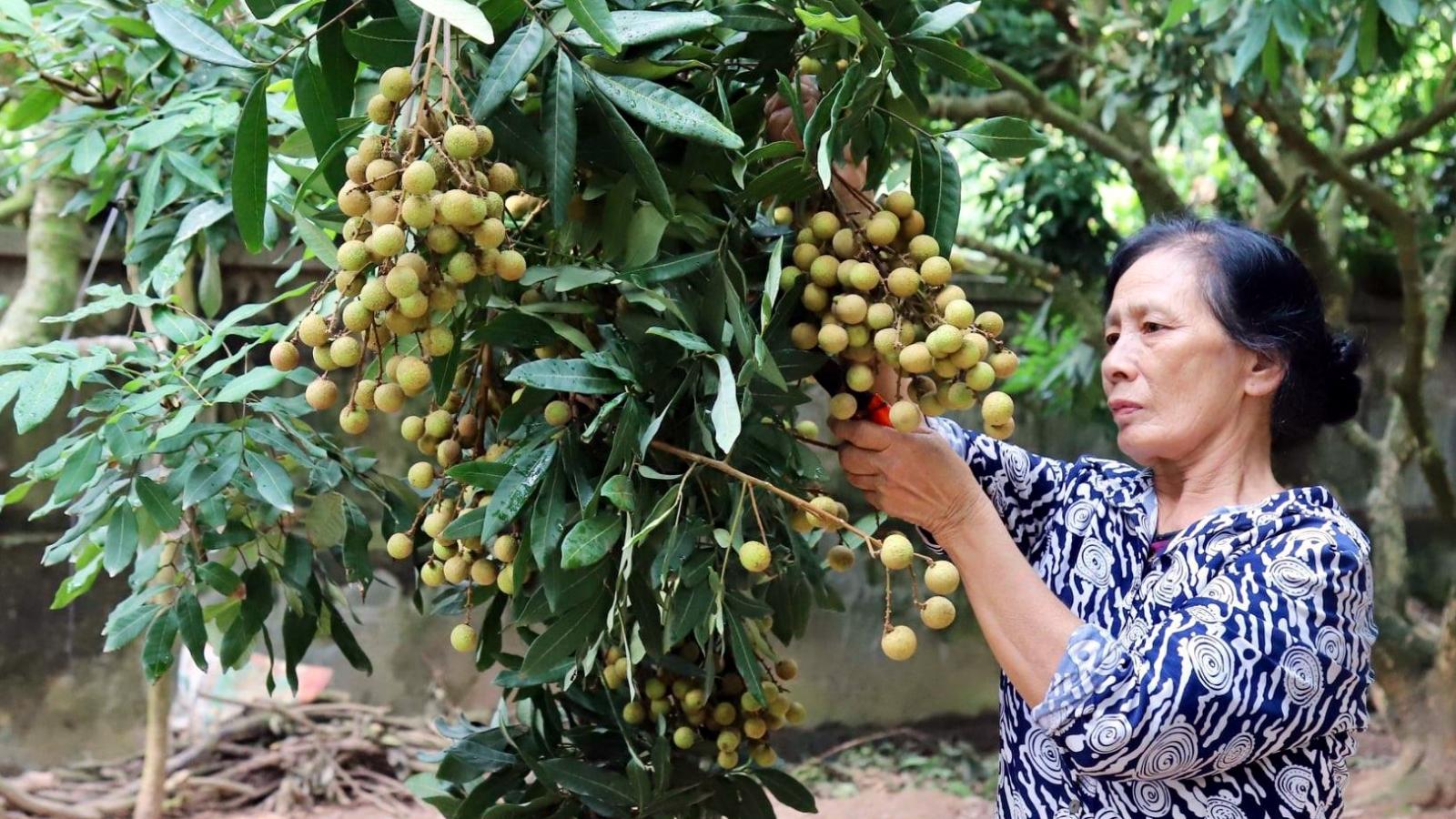 Kết nối tiêu thụ nhãn và nông sản Hưng Yên với 21 quốc gia, vùng lãnh thổ