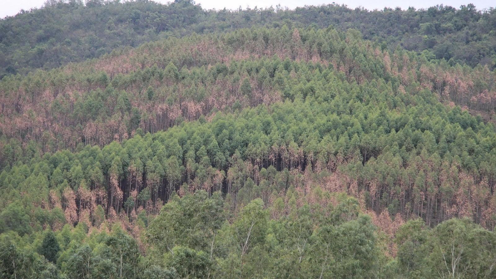 Nâng cao ý thức về phòng, chống cháy rừng của chủ rừng, người dân sống ven rừng