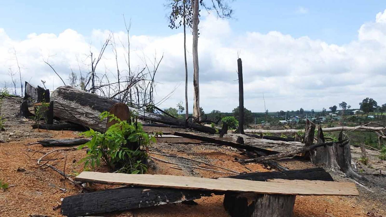 Mập mờ vụ 17ha rừng bị triệt hạ ở Kon Tum