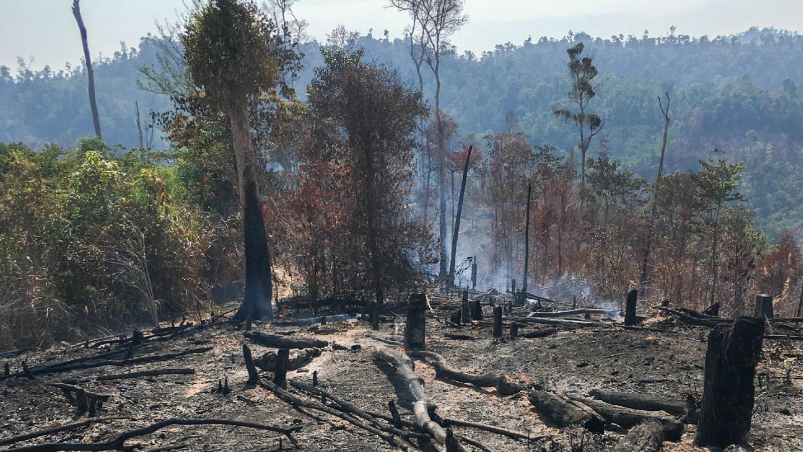 Phá rừng, chiếm đất tràn lan tại Đắk Lắk: Buông lỏng quản lý, xử lý chưa nghiêm