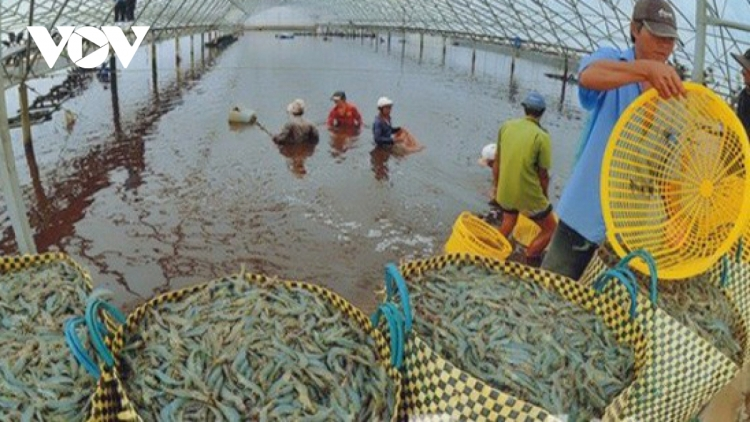 Local shrimp exports likely to reach US$4.2 billion this year